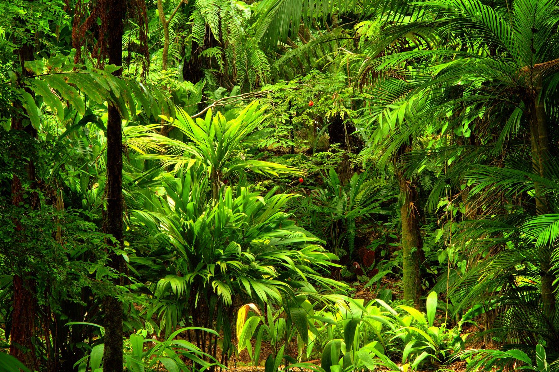 Arbres tropicaux au jardin des parfums et des épices
